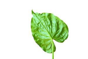 feuille verte isolée photo
