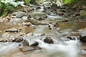 rivière dans la forêt photo