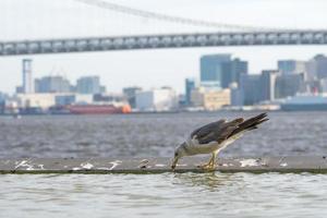 oiseau au bord de l'eau à tokyo photo