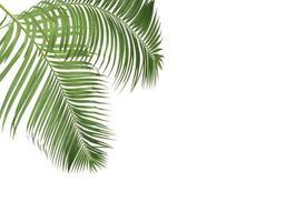 deux feuilles de palmier avec espace copie
