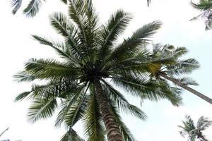 palmiers pendant la journée