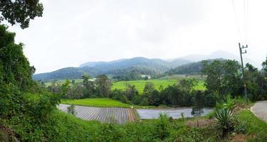 rizières dans les montagnes en thaïlande