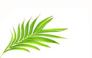 feuilles vertes brillantes isolées