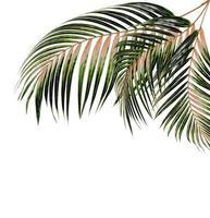 feuilles de palmier brunes et vertes