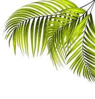 trois feuilles de palmier vert vif