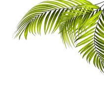 cadre de feuilles de palmier avec espace de copie