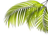 feuilles de palmier vert vif