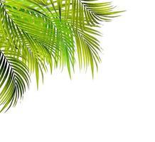 groupe de feuilles de palmier vert