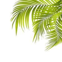 trois feuilles tropicales vert vif