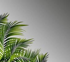 feuilles de palmier sur fond gris
