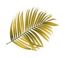 feuille de palmier tropical vert