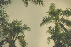 édition vintage sur les palmiers photo