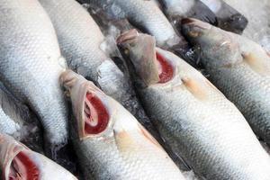 groupe de poisson frais photo