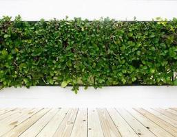 lierre vert sur clôture photo