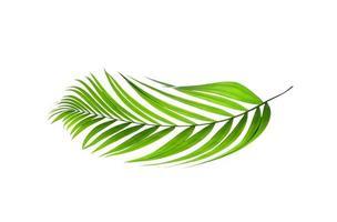 palmier courbé