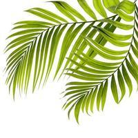 Deux feuilles de palmier sur isolé sur fond blanc