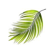 feuille verte tropicale sur fond blanc