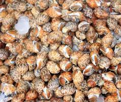 groupe d'escargots photo