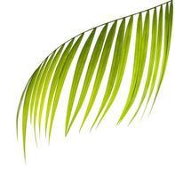 gros plan, de, a, feuille de palmier vert