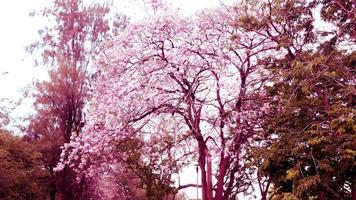 fleurs de trompette rose en fleurs photo