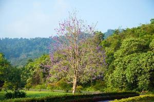 arbre fleuri bleu