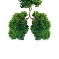 poumons d'arbres verts