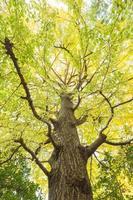 arbre en automne photo