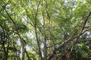 vieil arbre dans la forêt photo
