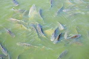 poissons nageant dans la piscine photo