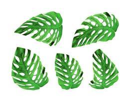 groupe de feuilles de monstera