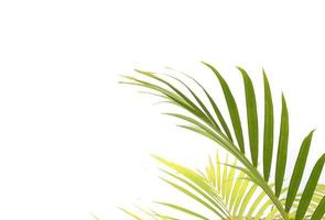 feuilles de palmier vertes et vibrantes