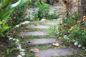 tremplin chemin de pierre dans le jardin