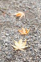 feuilles sur le sol