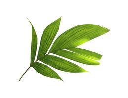 coupe de feuilles tropicales photo