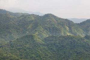 forêt sur la montagne photo
