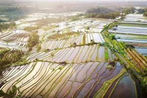 Vue aérienne des rizières en terrasses de Bali