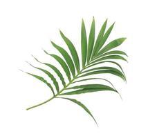 branche luxuriante de feuilles