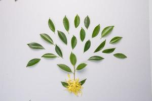 feuilles sur fond blanc photo