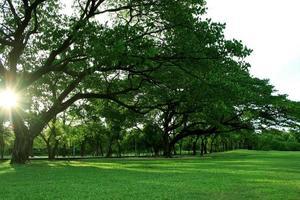 heure d'or sur les arbres et l'herbe