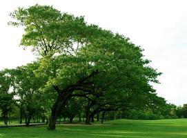 arbres verts sur l'herbe verte