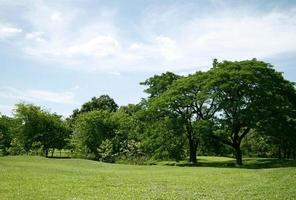 herbe verte idyllique et arbres