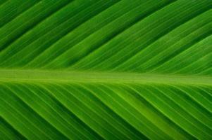 gros plan, de, feuille verte photo
