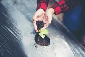 Main de jeune femme plantant un jeune arbre sur un sol noir photo