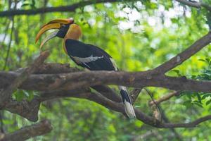 Calao oiseau dans un arbre le soir photo