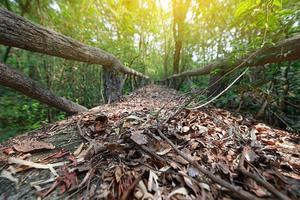 Gros plan d'une passerelle dans une forêt, sentier à l'apprentissage naturel dans une forêt