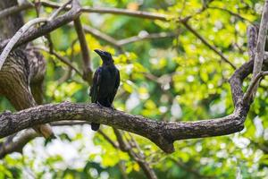 corbeau sur une branche d'arbre photo