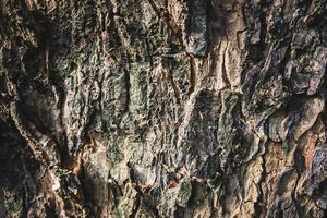 écorce d'arbre en bois photo