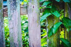 feuilles et une clôture en bois photo