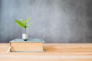 plante sur un livre photo