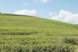 terrain vallonné d'herbe photo